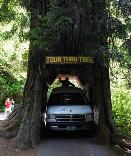 tt_tree_van.jpg