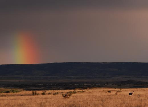 deer_rainbow_sm.jpg